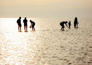 832421_beach_silhouettes_1.jpg